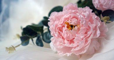 """Tạo hình bằng chất liệu giấy gạo trong trang trí bánh – Wafer Paper tạo nên """"vườn"""" hoa lá xinh yêu"""